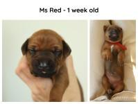 1week_red