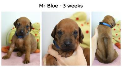 3weeks_blue