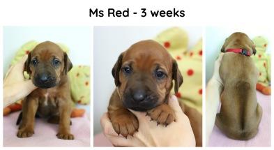 3weeks_red