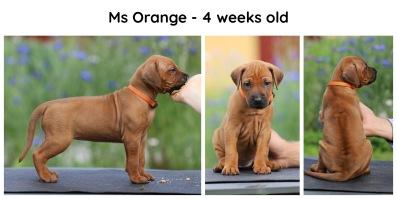 4weeks_orange