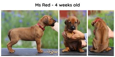 4weeks_red
