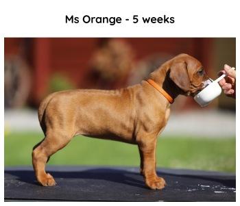 5weeks_orange