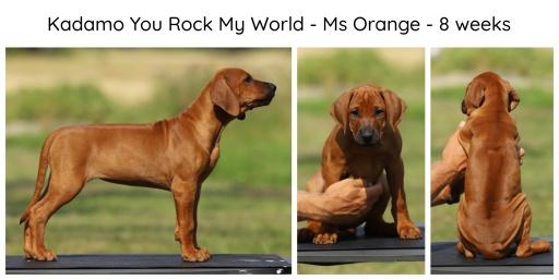 8wks_orange