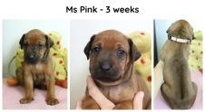 3weeks_pink