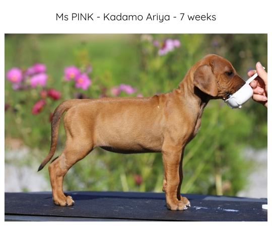 7wks_pink