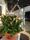 Sthlm Grönt gillar att matcha växter och blommor med övrig inredning.