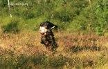 hakzaaport_092012
