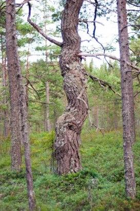 Konstigt träd.