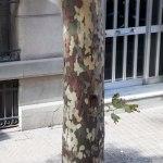 Träden såg ut som de var militärklädda.