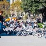 Många duvor fanns det på torget.