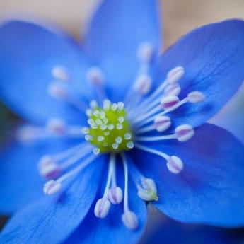 Längtar efter våren nu, med alla fina färger...
