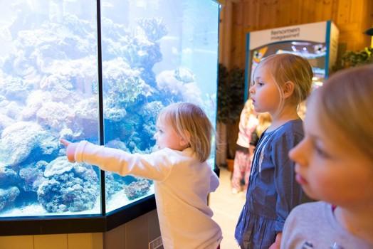 Nova var väldigt fascinerad över fiskarna!