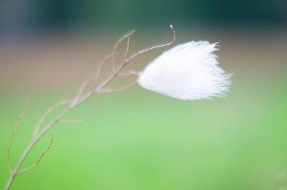 En fjäder vajar i vinden.