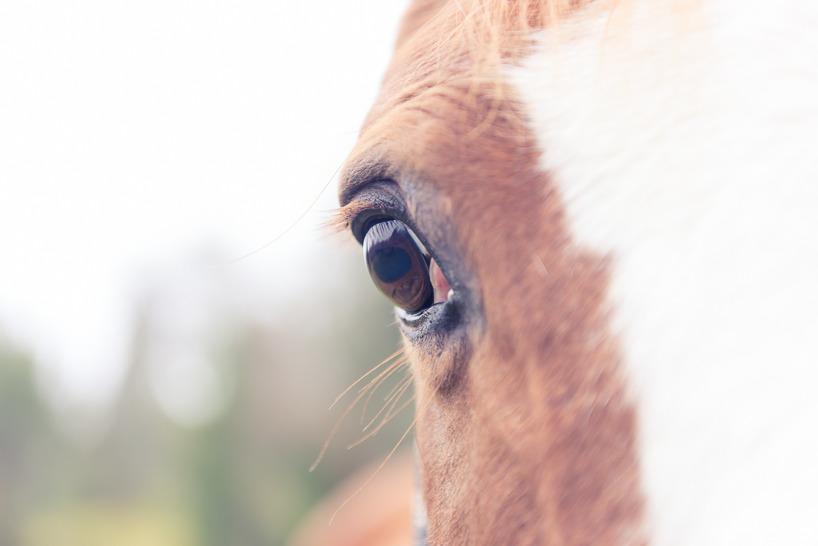 Hästfotografering