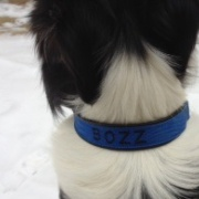 Hundhalsband m. brodyr och skinnfoder