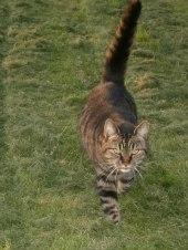 Min katt Brorsan