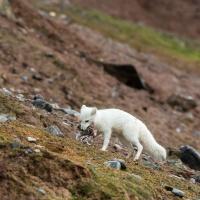 Svalbard (Aug 2014)