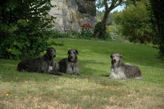 Grayrory's Moonshell, Grayrory's Applecross and Manticorns Denise