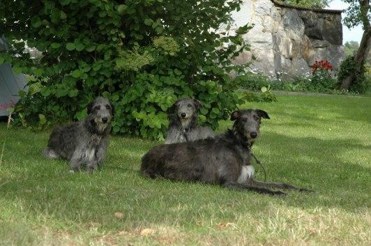 Grayrory's Applecross, Manticorns Denise and Grayrory's Moonshell