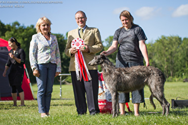 Grayroy's Hyacinth winning Best in Show in Nørresundby, Denmark July 2017