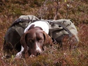 Storm vilar efter vandringen till fågelmarkerna. Snart är det hans tur att hitta fågel.