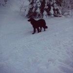 Att pulsa i djupsnö är bra och effektiv träning. Gå sakta i snödjup som är upp till knäna på hunden.