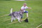 Att lyfta på benen stärker ryggmuskulaturen och hjälper hunden att bibehålla sin smidighet.