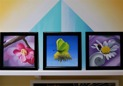 Original Oil on panel - Alla 3 blomtavlorna / All 3 small flower works - one prize