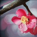 Giclée prints on canvas, på kilram/in stretcher frame - Morning Dew - 24x24 cm - Giclée/digigraphie uppspänd på KILRAM - Yttre ram (svart träbets) samt upphängningsanordning ingår i denna produkt