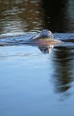 Bild från Eksjön