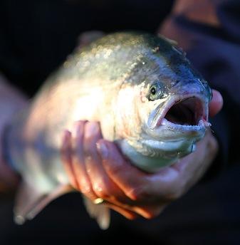 Flugfiskekurs - Flugfiskekurs