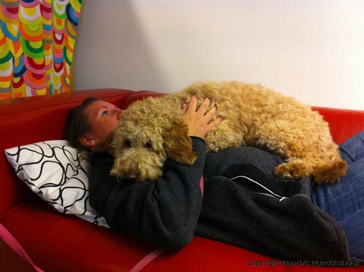 terapihund
