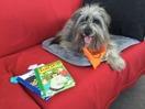 Terapi- och skolhundsutbildning