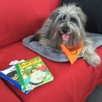 Skol- och terapihundsutbildning