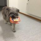 RUT-hunden start 23/10 -17