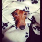 Kurs för rädda/blyga hundar start 15/10 -18