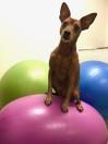 Blyga hundar - Bygg självförtroende! start 15/8 -19
