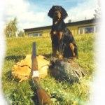 J Vinstamarkens Pino på jakt 6 mån gammal