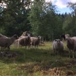 Utflykt till fårhagenIMG_2042