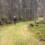 Smålandsskog om hösten