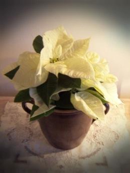 Webbmoster  tackar för den fina blomman