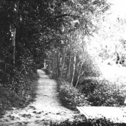 Parken promenadsvägar