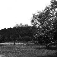Vid fälten