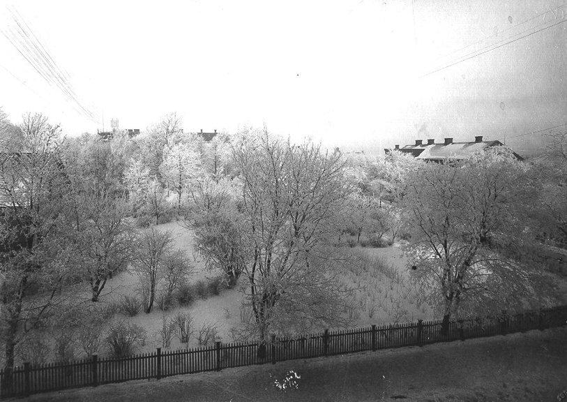 Ludvig Ericson tog bilden genom sitt ateljéfönster en vintrig morgon. Prästgårdsträdgård, Kyrkepark, m fl trädgårdar bildar en nästan ogenomtränglig iskristallvy. (Skövde Stadsmuseum)