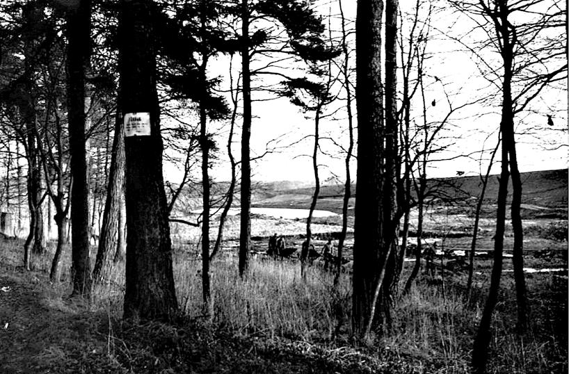 Harkessjön med våtmarker söder om spåret vid Harket.  (Skövde Stadsmuseum)