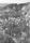 8 680608 Uppe t vä syns hus på Myrens sydsida ängsull