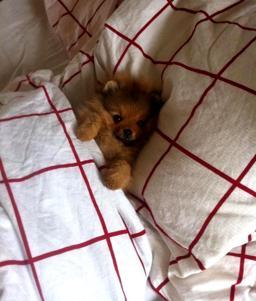 Chanel får sova i pappas säng