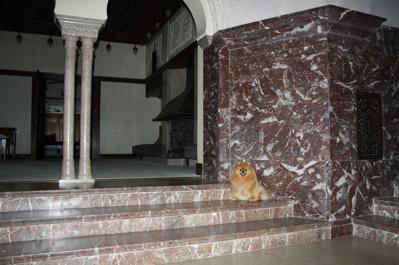Fame på Tjolöholms Slott i trappan till herrarnas rum