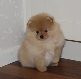 Chloé 7 weeks