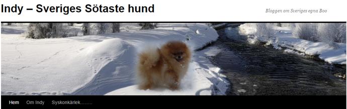 SVERIGES GULLIGASTE HUND. En blogg om Indys liv, motsvarande Världens sötaste hund Boo